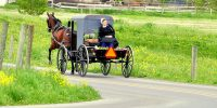 horse buggy fresh flowers