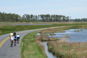 Blackwater Refuge Bike Tour